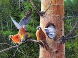 綺麗な羽の絵画